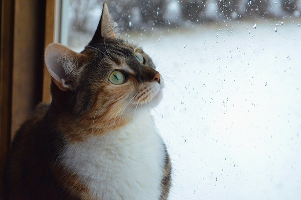 「軒の出がない家」の雨音公開≪実例≫