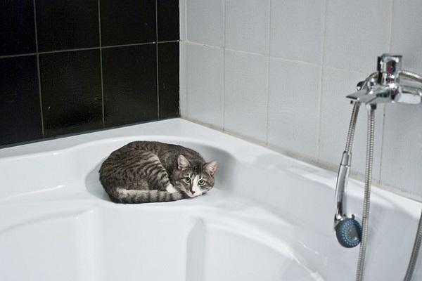 浴室の床が汚い!ユニットバスの効率的な掃除法